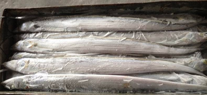 FROZEN WHOLE ROUND HAIRTAIL (RIBBONFISH)