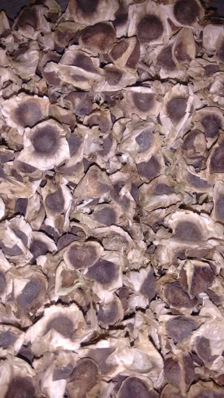 100% Natural Moringa Seed Exporters