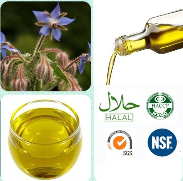 Natural Borage Oil(20%GLA)/Borage seed oil