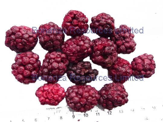 Freeze Dried/Lyophilized Blackberries