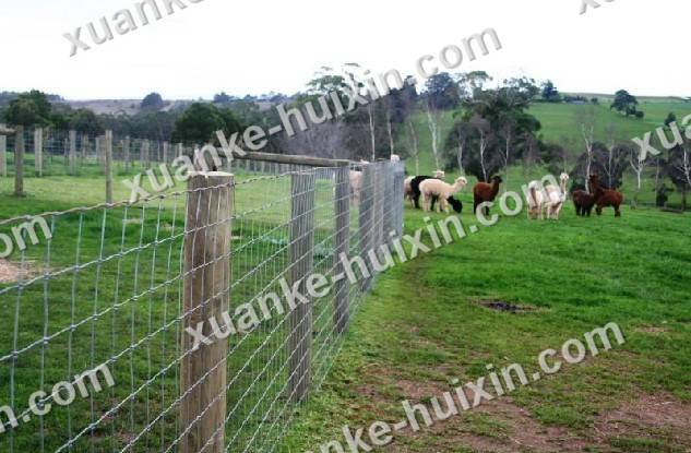 wire fencing metal fence Animal fencing system safety fence industry