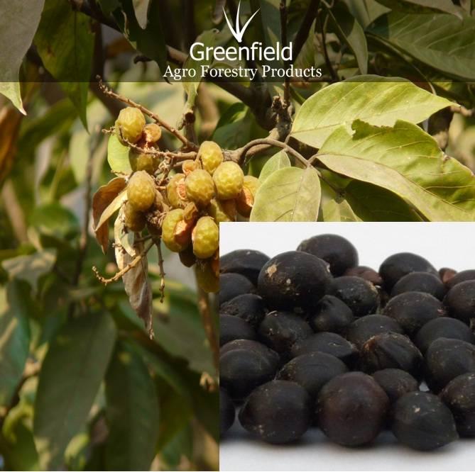 Reetha medicinal seeds ( Sapindus Mukorosse )