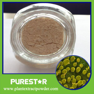 Yeast Beta Glucan powder
