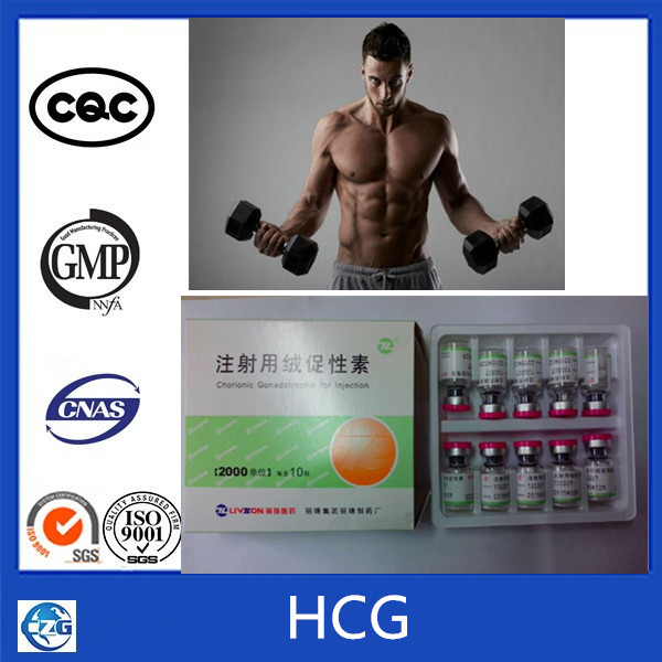 Healthy Peptide Human Chorionic Gonadotropin HCG for Pregnancy Test