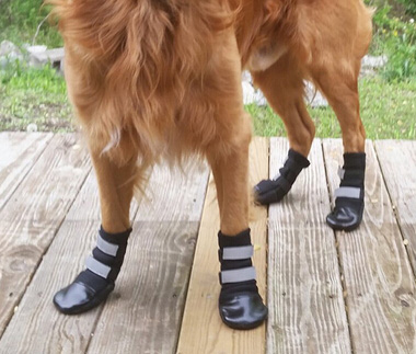 Waterproof Dog Soft Boots