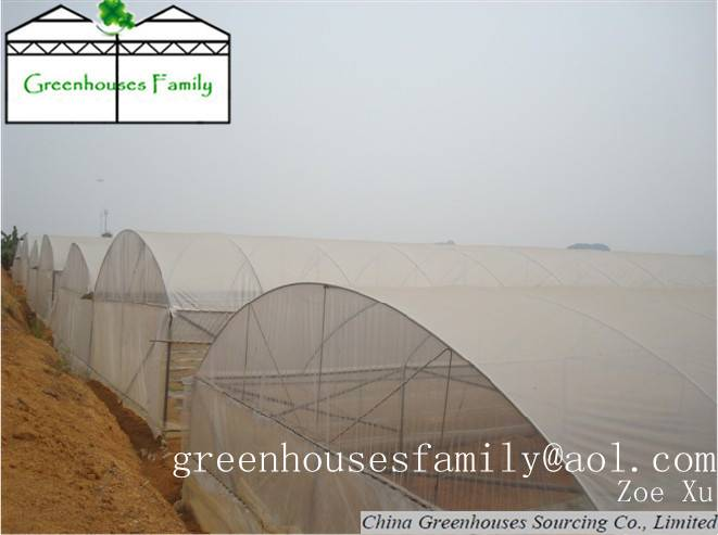 Commercial Greenhouses China GS832M