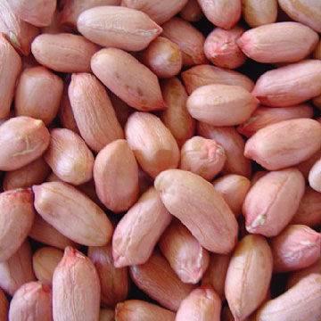 supply peanut kernels from china, raw peanuts, peanut