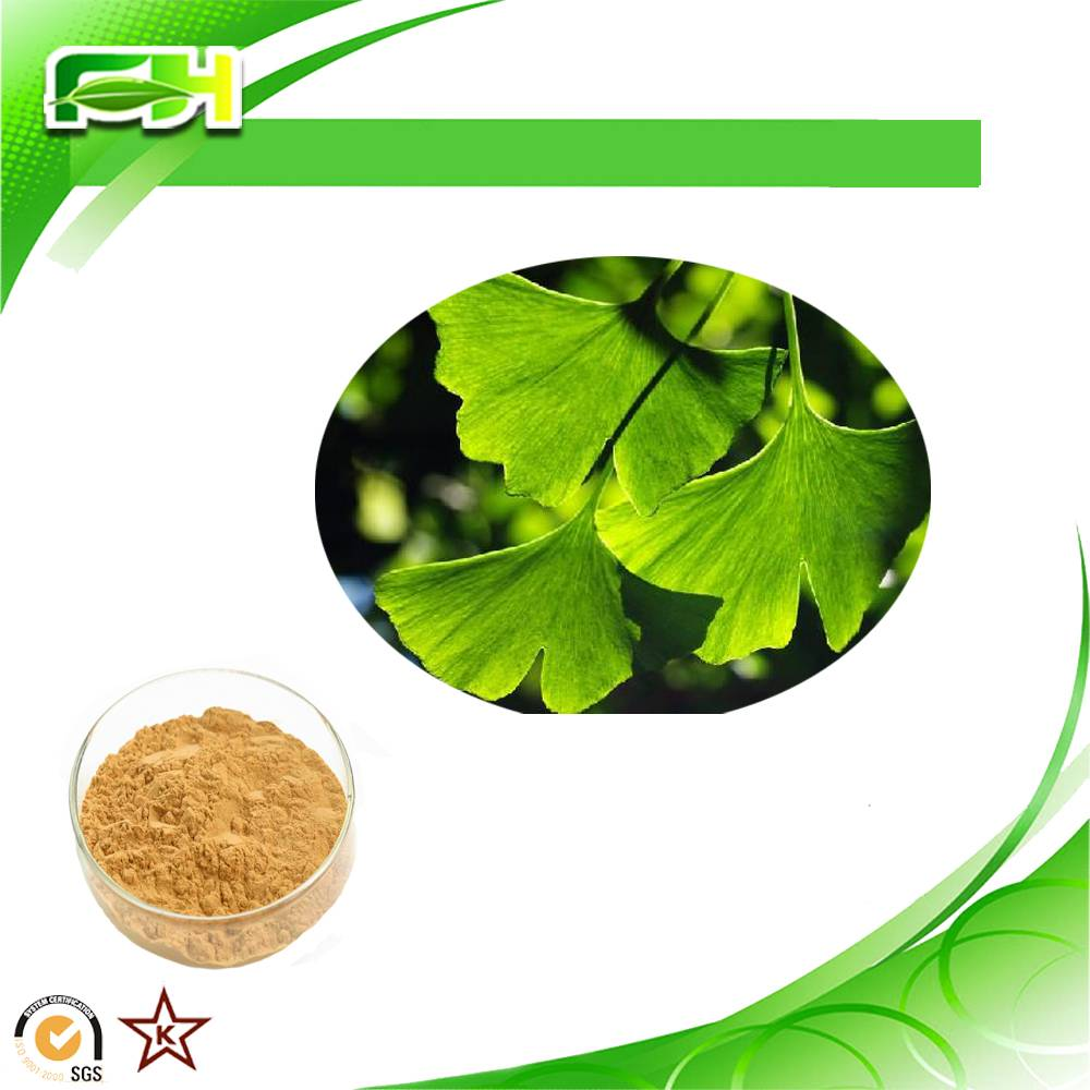 Factory Supply Ginkgo Biloba Extract