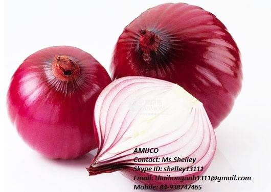 Red/Purple Onion