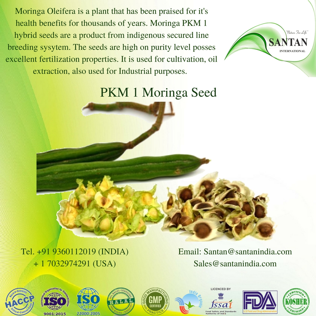 Moringa Oleifera pkm1 seeds