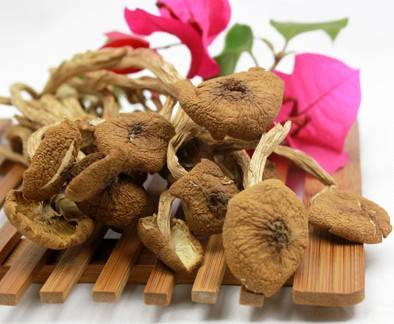 Dried tea tree mushrooms healthy recipes