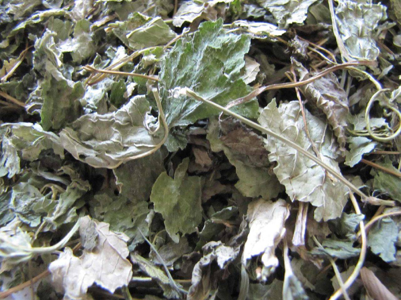 Melissa leaves/ Lemon Balm Leaves (cleaned /with sticks)