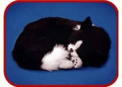 fur animal toy, sleeping pets, sleeping dog, sleeping cat, Realistic Looking Puppy