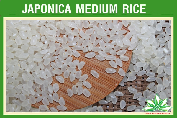 JAPONICA WHITE RICE 5% BROKEN - ORIGINAL VIETNAM - JULIA CAO (SKYPE : sonainter5)