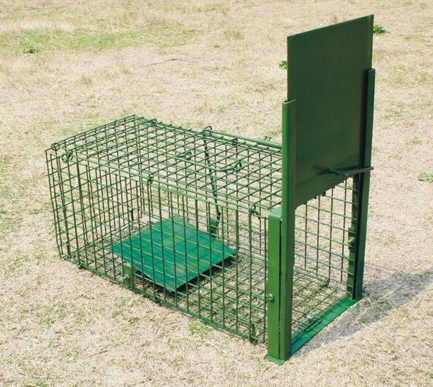 Collapsible Make Live Animal Cage Trap with two entry