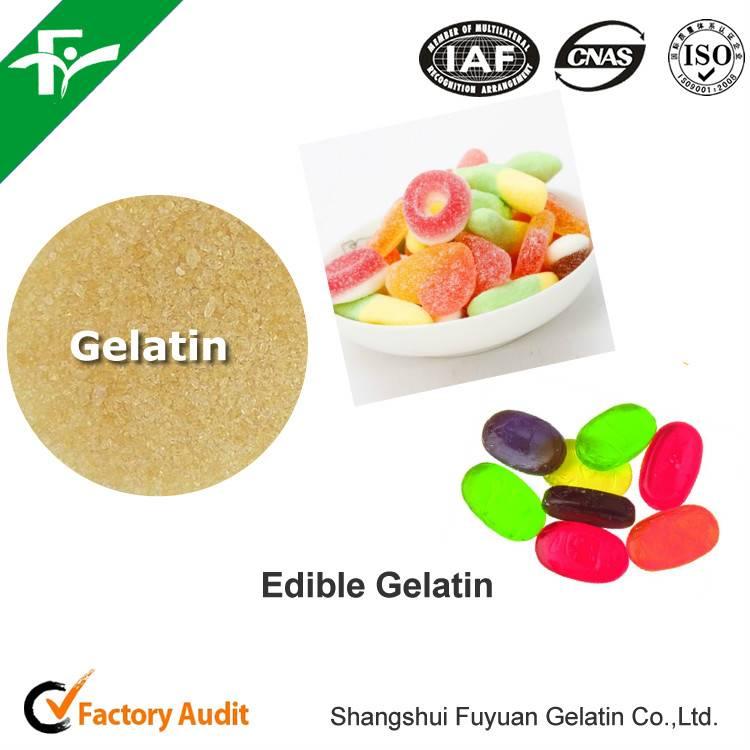 Fish Gelatin