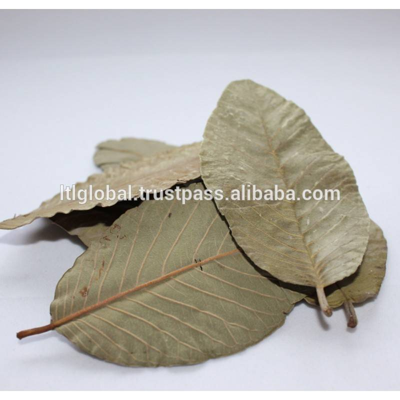 Dried Guava leaves