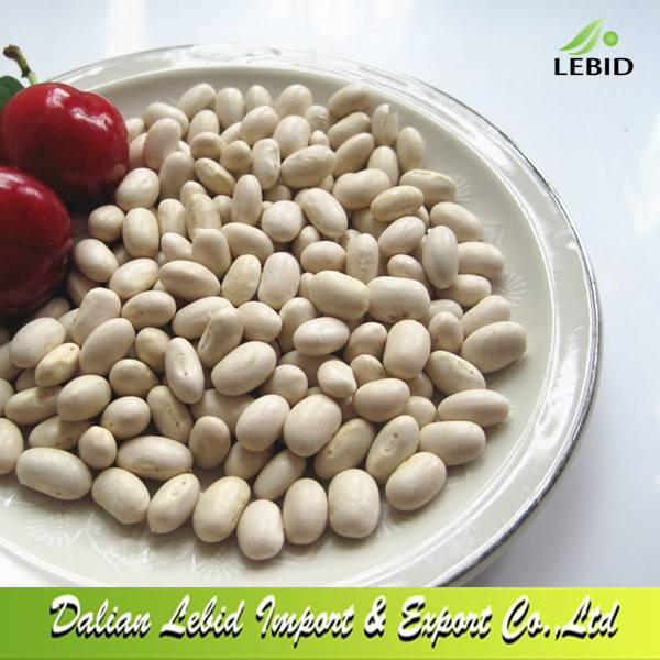 High Quality Dry Japanese Type White Kidney Beans Wholesale