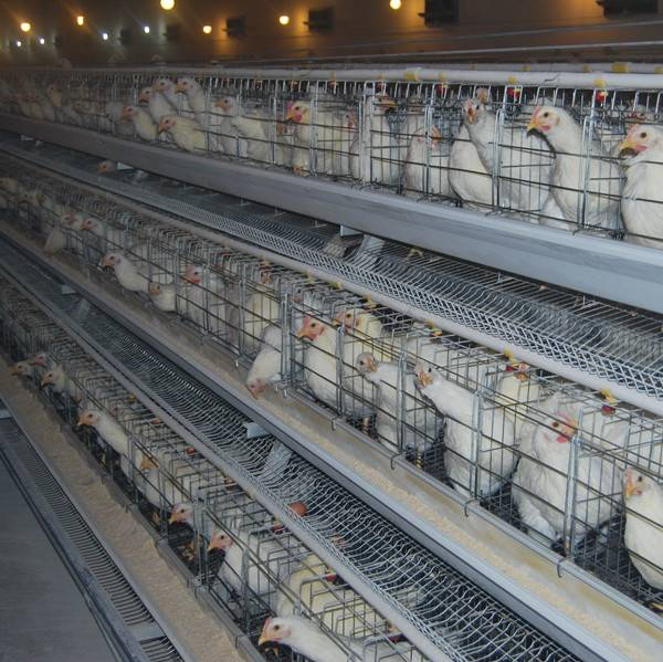 chicken layer cage manufacture
