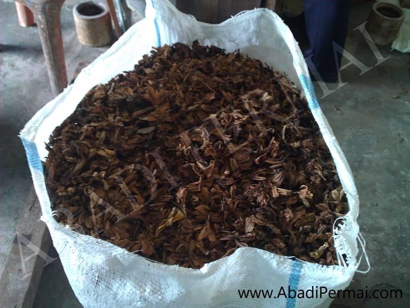 Dried Plumeria or Frangipani