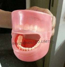 Oral Cavity Cover Model for dental manikin