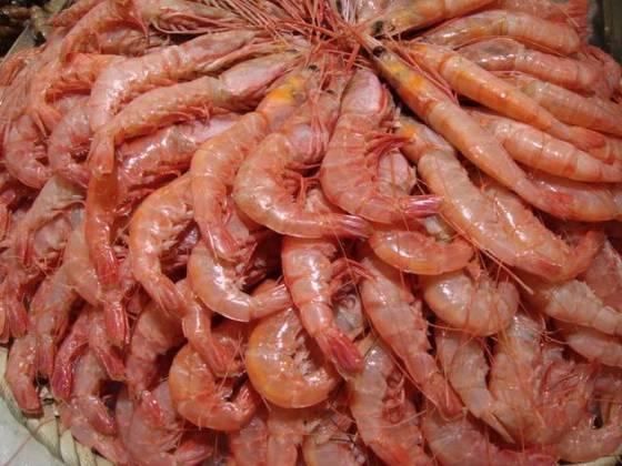 Frozen Shrimps,Dried Shrimps,live crabs,Cuttlefish,Live Lobster, Frozen Lobster