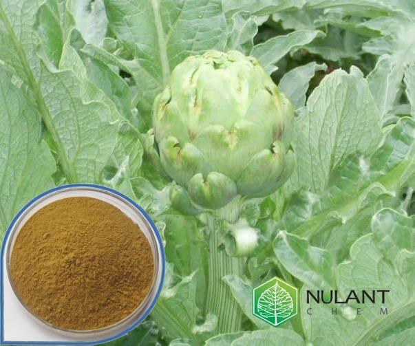 Artichoke extract 5% Cynarine
