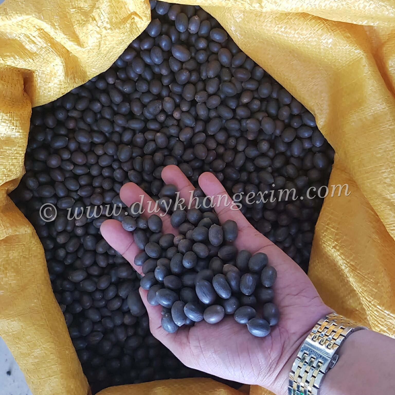 DRIED BLACK LOTUS SEEDS WITH ATTRACTIVE PRICE, BEST QUALITY