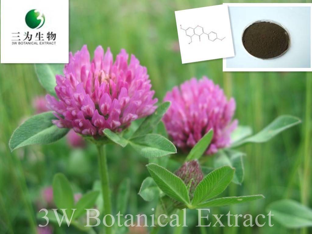 Red Clover Extract Isoflavones(sales05@3wbio.com)
