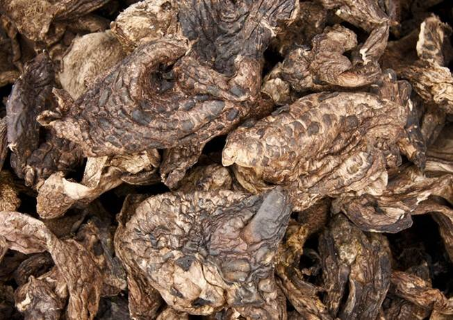 Dried Sarcodon aspratus mushroom with anti-cancer function