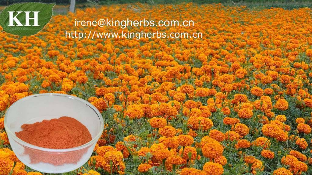 Lutein Marigold Extract CAS :127-40-2