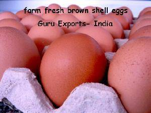 INDIAN EGGS EXPORTERS, POULTRY FARM EGGS SUPPLIERS, BROWN SHELL EGGS PRODUCERS