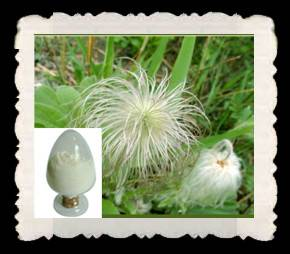 High quality High quality Anemone Root P.E./ Chinese Pulsatilla Root extract /P.E.AnemoninRoot P.E./