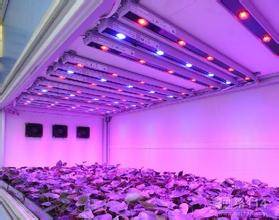 LED plant grow light T8 tube light