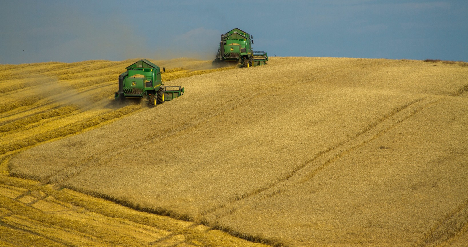 High Quality Wheat Grain ( Various types; Hard Red Winter, Durum, Soft White etc)