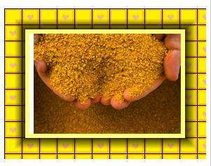 Feed Grade Corn Gluten Meal
