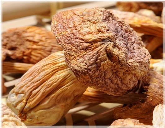 Dried Agaricus blazei mushroom with anti-cancer function