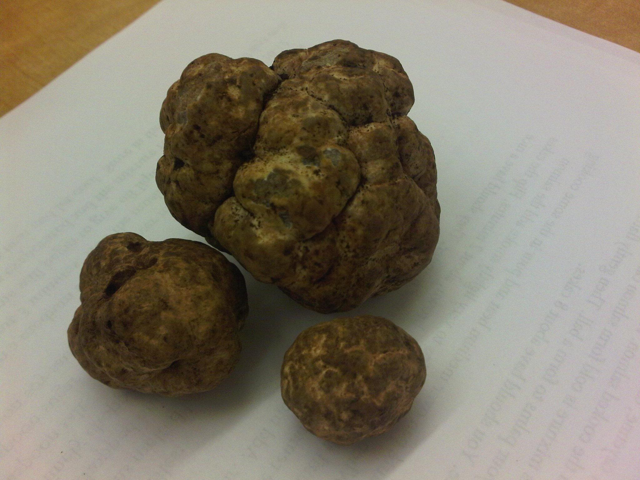 buy truffle