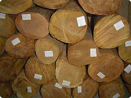 Utile wood for sale ADD SKYPE (Ekema.martin1)