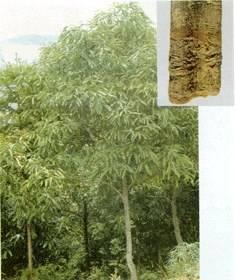 cinnamon bark P.E./extract;cinnamon;flavones20% ;polyphenols30%