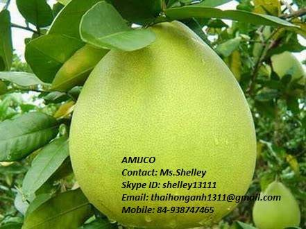 Pomelo (Grape fruit )