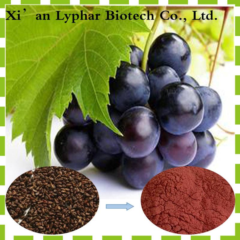 2016 hot sale factory supply Naturel 95% Grape Seed P.E extract