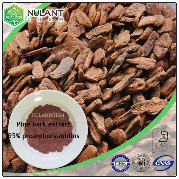 Pine bark extract proanthocyanidins 95%
