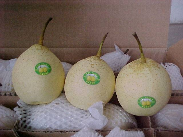 Ya Pears, Snow Pears, Golden Pears, Shandong Pears