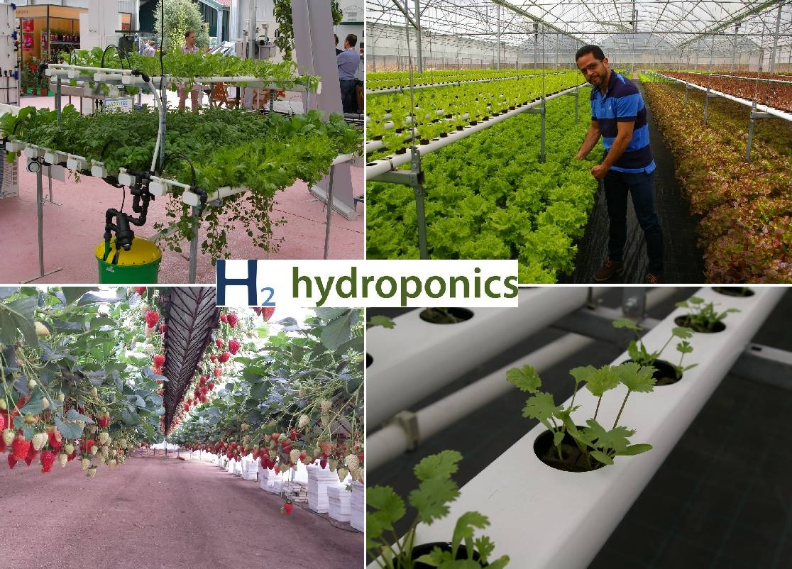 Commercial greenhouse for aeroponics, hydroponics and NFT growing systems