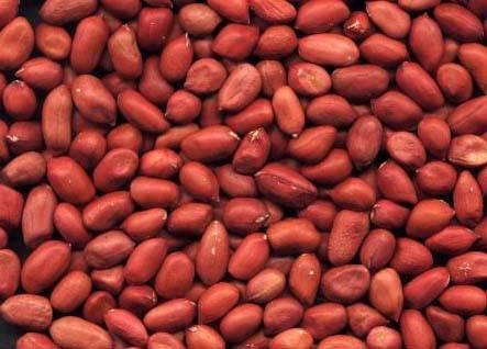 Round Type Red skin Peanut Kernel