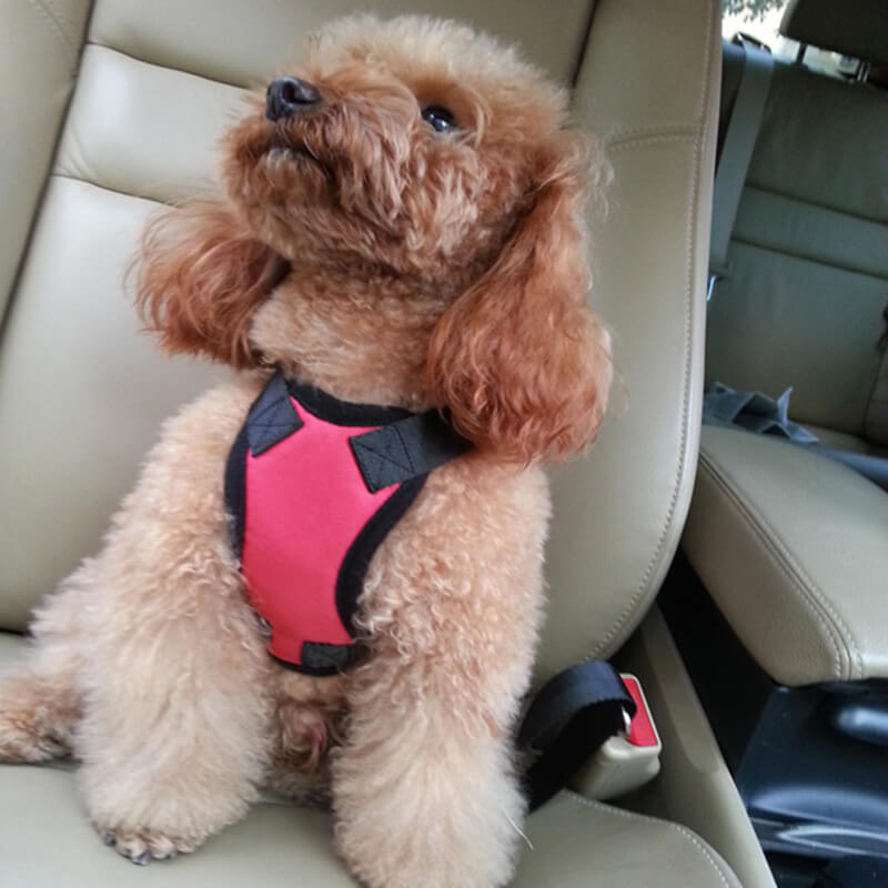 Adjustable Outdoor Pet Vest No Pull Pet Harness Easy Control For Dogs