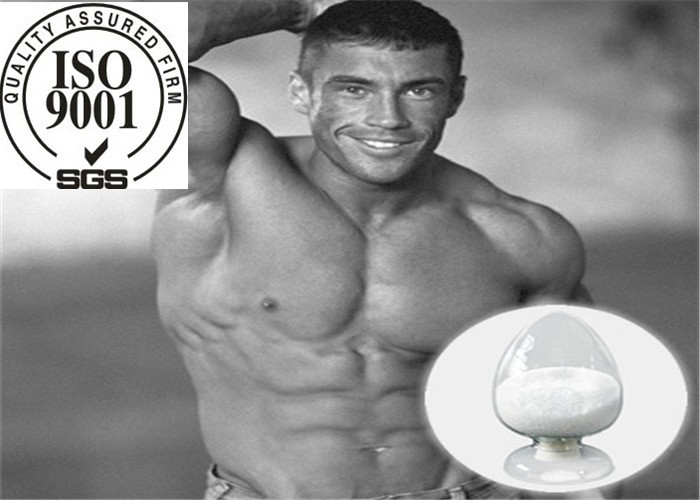Herbal Extract Safe Injectable Testosterone Decanoate For Muscle Gainning