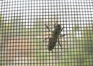 1816mesh,fiberglass insect screen, fiberglass window screen, fiberglass mosquito net
