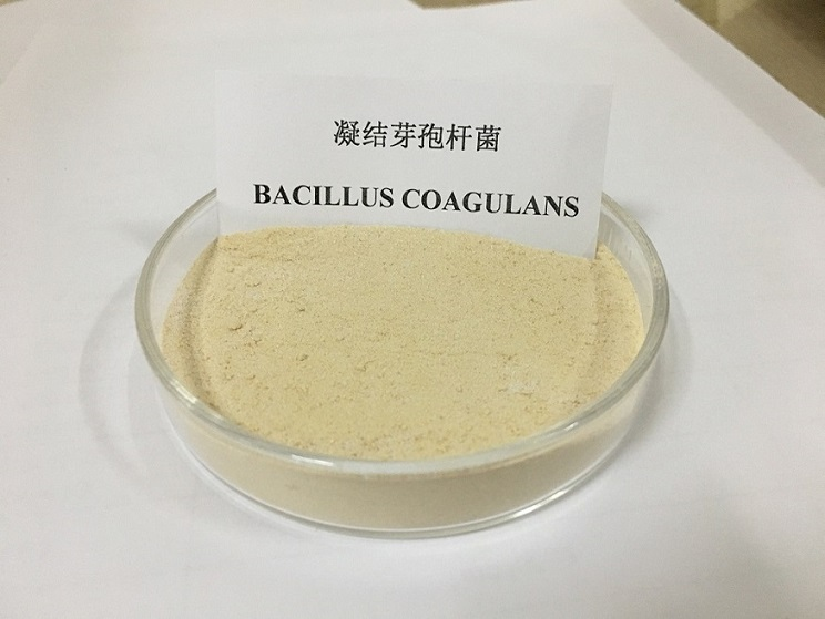 ANIMAL PROBIOTICS BACILLUS COAGULANS